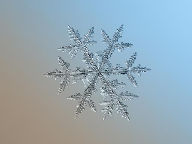Macro-Snowflake-10