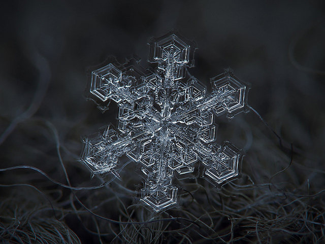 Macro-Snowflake-19