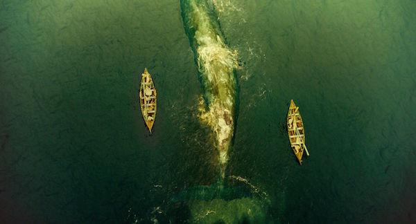 au coeur de l ocean critique film baleine