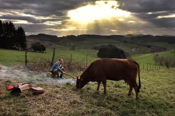 critique film la vache jamel paysage