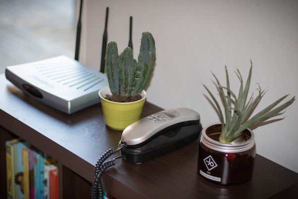 Vitamin Plant plante homme cactus