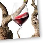 Gaillac vin rouge vignoble