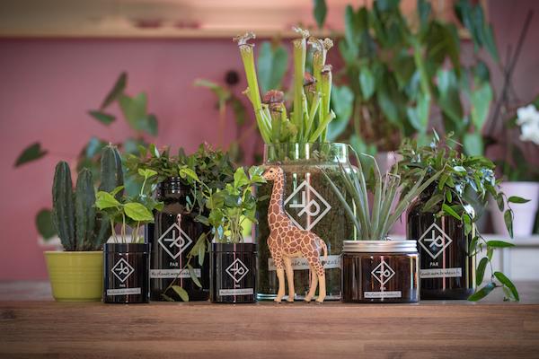 Vitamin Plant plante homme avis