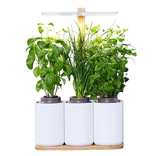 idee cadeau plantes