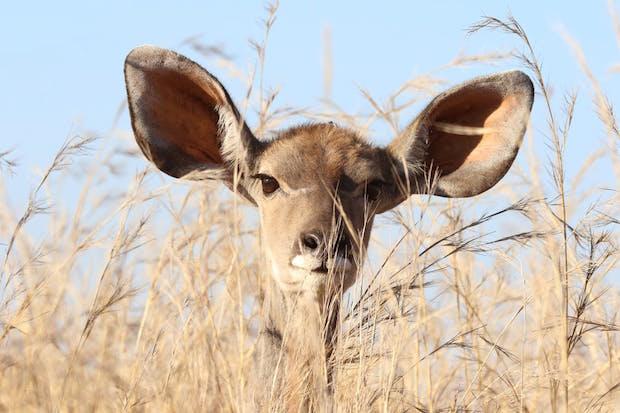 Comment se nettoyer les oreilles ?