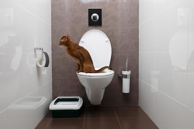Allez aux toilettes