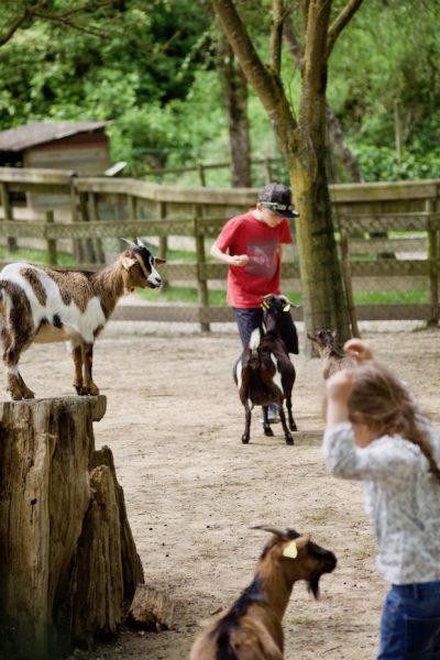 parc walibi rhone alpes animaux