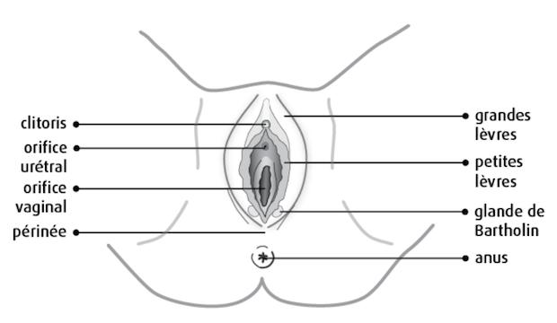 comment faire un cunnilingus bon cunni schema