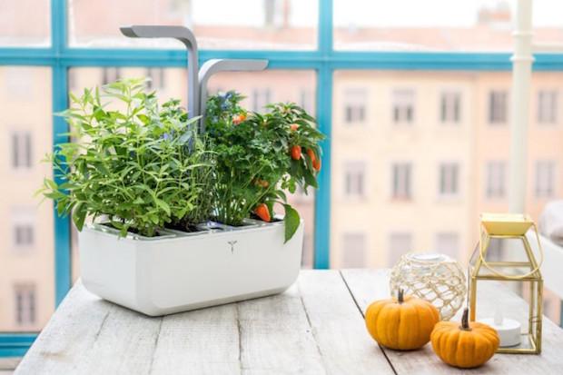 concours potager veritable jardin interieur