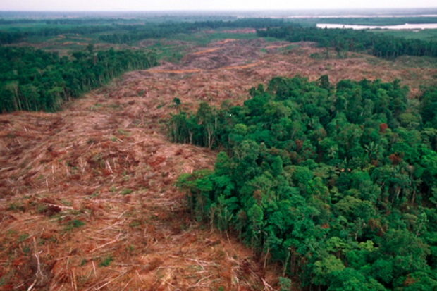 alternative viande deforestation