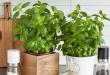 Comment faire un jardin aromatique d'intérieur ?