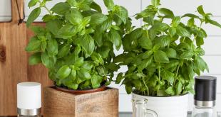 faire pousser plantes aromatiques en interieur cuisine jardin aromates