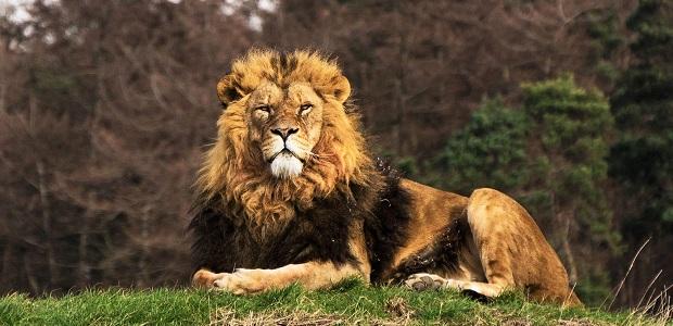 pli du lion ride prendre soin de soi