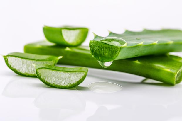 Aloe vera, les bienfaits pour le corps