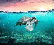 10 solutions pour réduire votre consommation de plastique