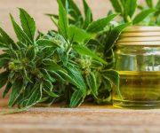 L'huile de cannabis (CBD) : à quoi ça sert ?
