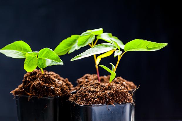 ecosia-plants-arbres