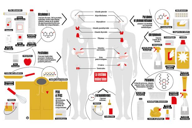perturbateurs-endocriniens-infographie