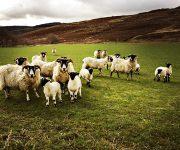 Conseils et itinéraires pour découvrir l'Écosse en 7 jours !