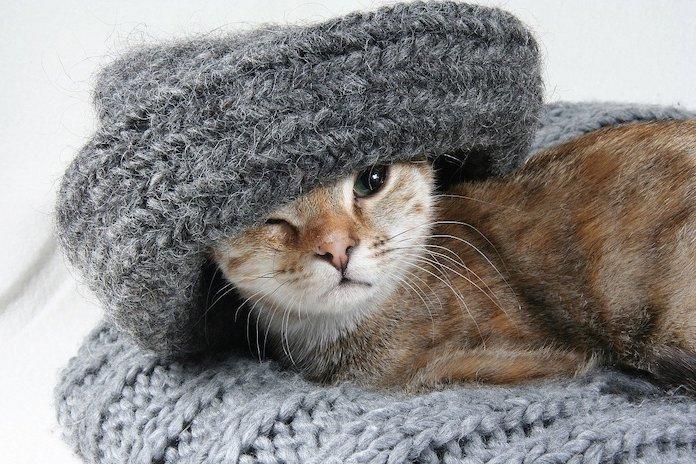 objet indispensable pour chaton