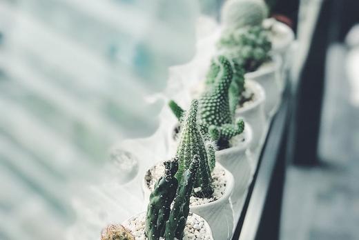 decoration interieur plantes vertes cactus