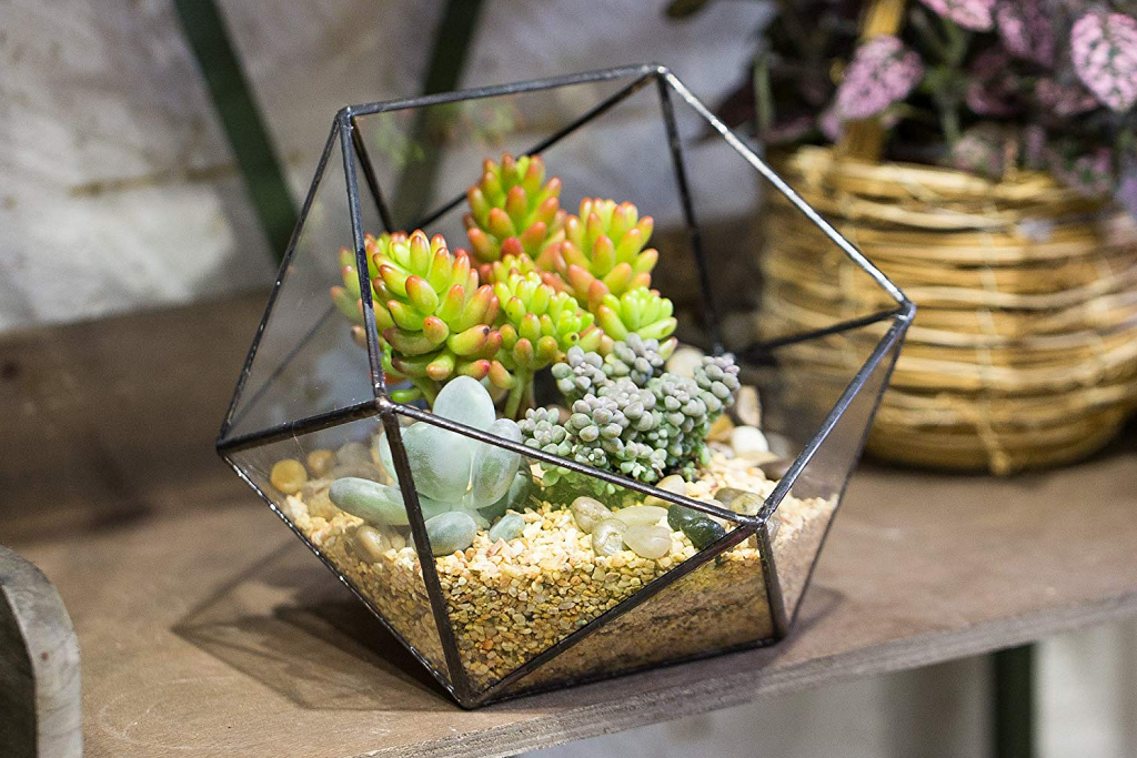 decoration interieure pot fleur moderne geometrie transparent verre