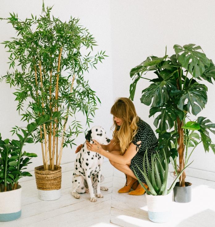 decoration interieure plantes hautes plus d'un metre