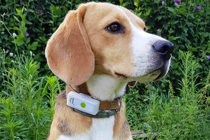 innovation start up chien collier gps pas cher smartphone connecté