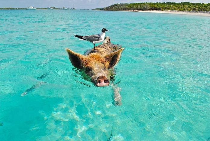 croisiere vacances 2020 pas cher destination bahamas