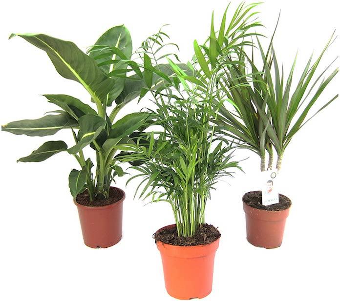 20-objets-homme-moins-20-euros-plantes-vertes