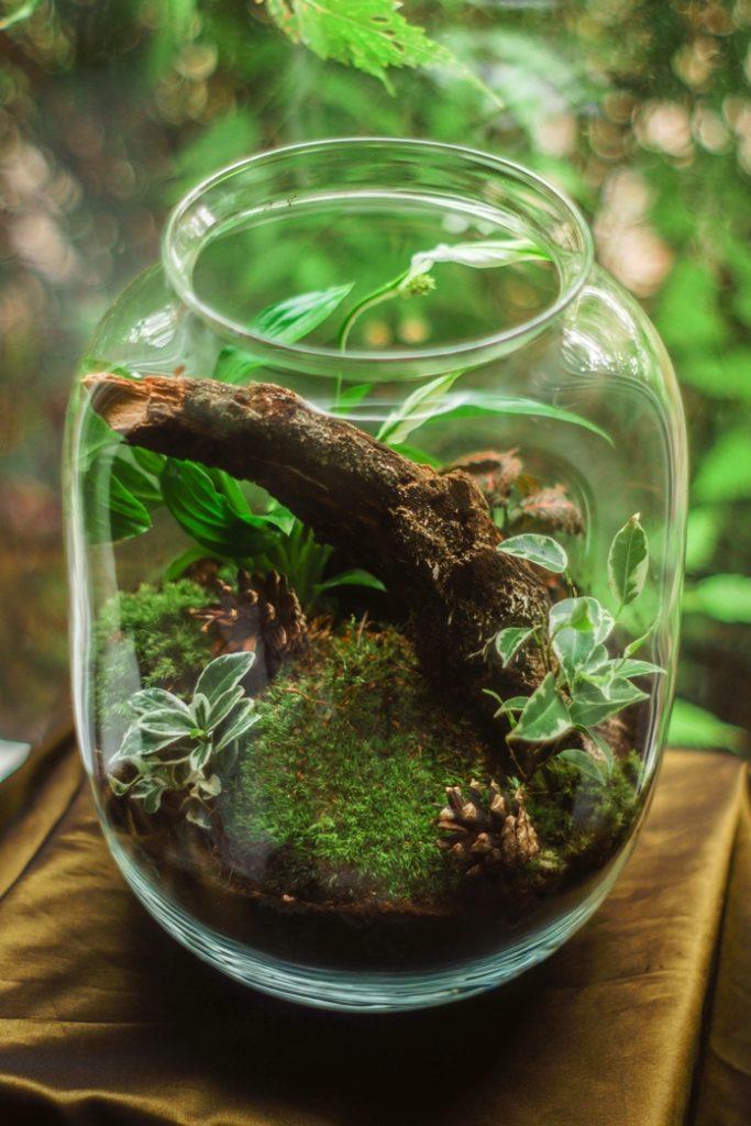 idee cadeaux ecolo ecologie vegan ecoresponsable ethique made in france durable sain naturel zero dechet terrarium plante bouteille jardin verre