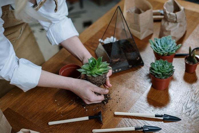 activite occupation famille familiale vacance manuel enfant creatif jeu bricolage terrarium nature jardin potage