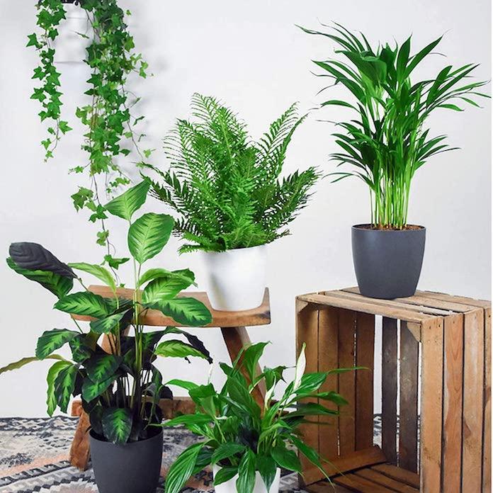 comment-rafraichir-maison-plantes-vertes
