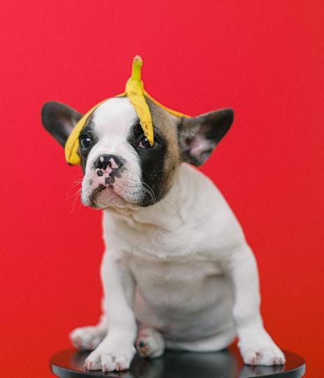 dressage chien chiot accessoire objet gadget cliker sifflet aide facile chiot difficile conseil livre betise mauvais comportement degat