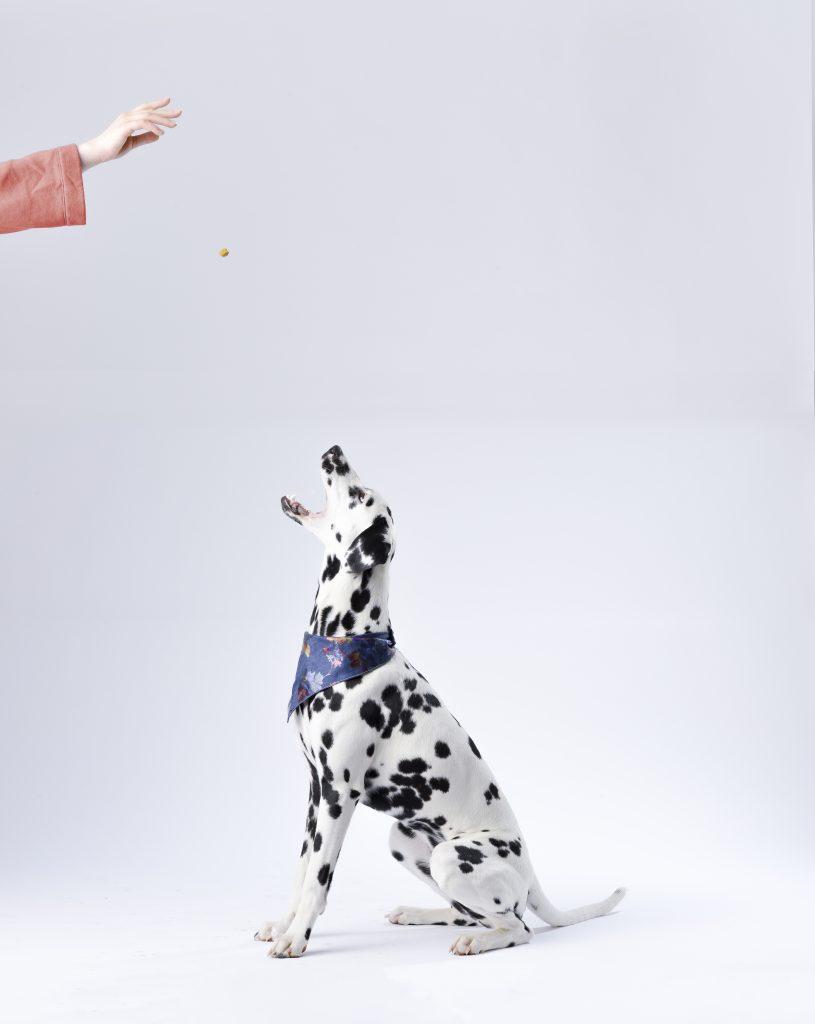 dressage chien chiot accessoire objet gadget cliker sifflet aide facile chiot difficile conseil livre sport canin