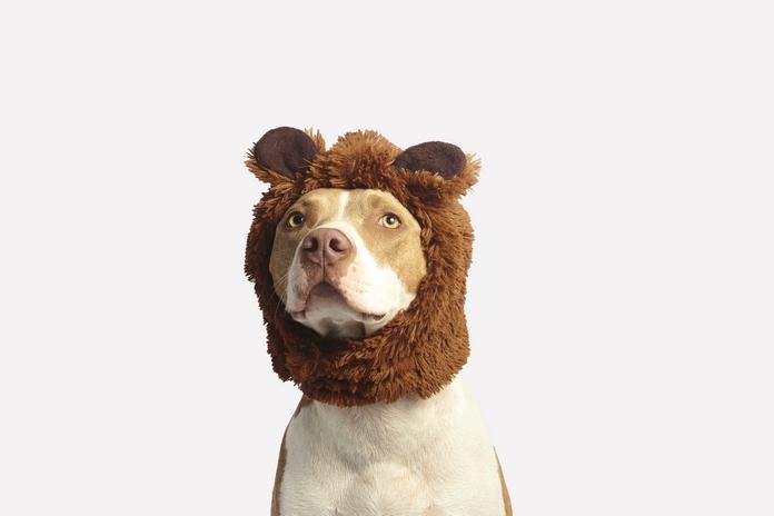 dressage chien chiot accessoire objet gadget cliker sifflet aide facile chiot difficile conseil livre