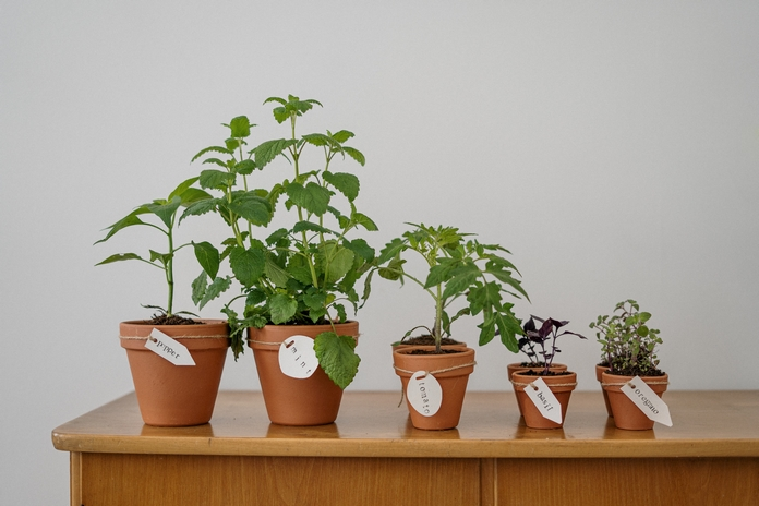 Petite plante naturelle interieur en pot