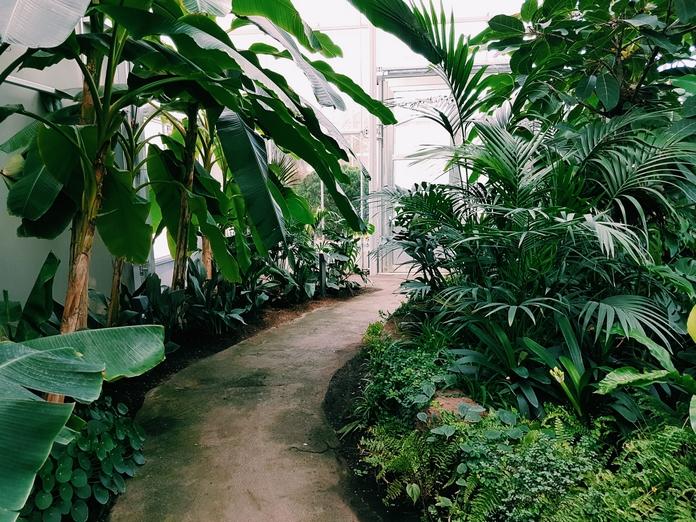plante verte haute arbre artificiel interieur exterieur xxl