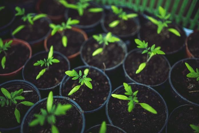 potager interieur graine herbe aromatique pot