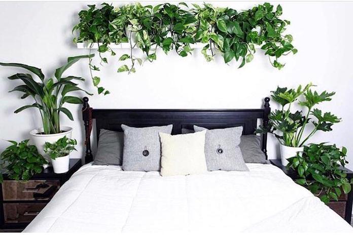 ameliorer-sommeil-plantes-vertes