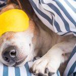 ameliorer-sommeil-sieste