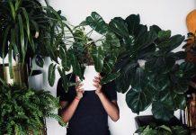 Les cinq plantes interieur increvables