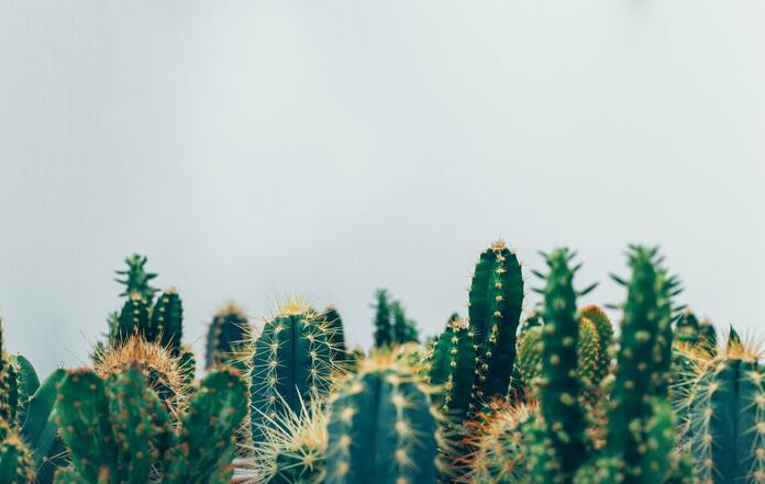 les cinq plantes d interieur increvables le cactus