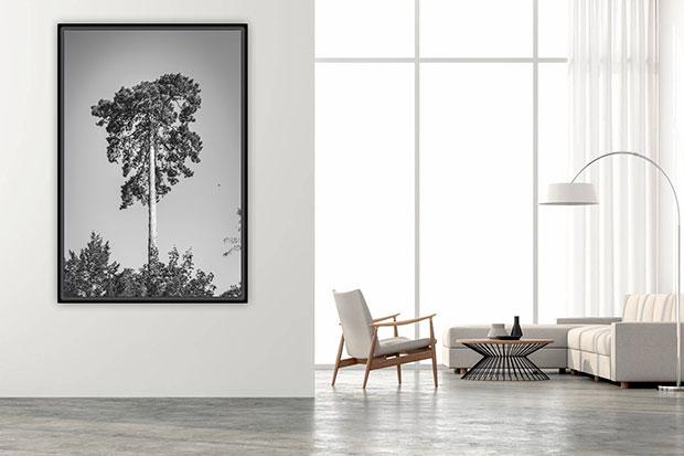 photo nature tirage art
