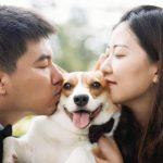 Partir-en-vacances-sans-son-animal-les-solutions-chien-amour