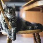 Partir-en-vacances-sans-son-animal-les-solutions-chat-poils-long
