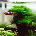 Partir-en-vacances-sans-son-animal-les-solutions-poisson-aquarium