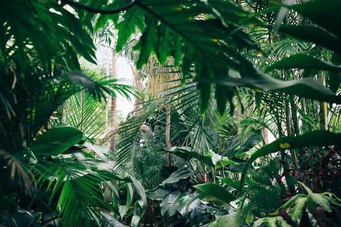 comment-entretenir-des-plantes-pendant-les-vacances-exposition-lumineuse