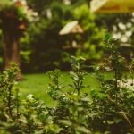 comment-entretenir-des-plantes-pendant-les-vacances-jardin-nature