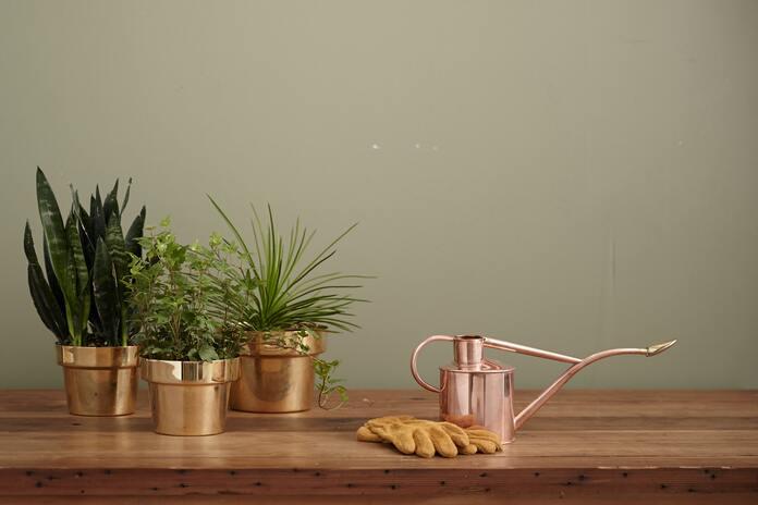 comment-entretenir-des-plantes-pendant-les-vacances